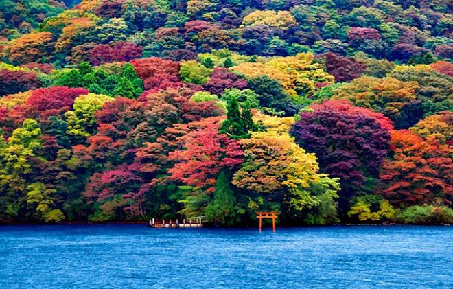 SUZUKI-Swift-LongArticles-2012-marzo-torii-04-1461815078_660x0