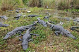Everglade-3-1462789626_660x0