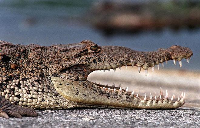 Everglade-4-1462789670_660x0
