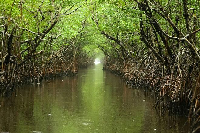 Everglades-1462789572_660x0