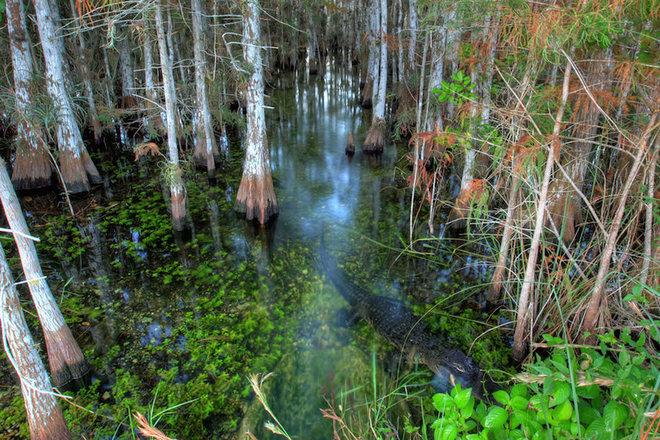 Everglades-2-1462789611_660x0