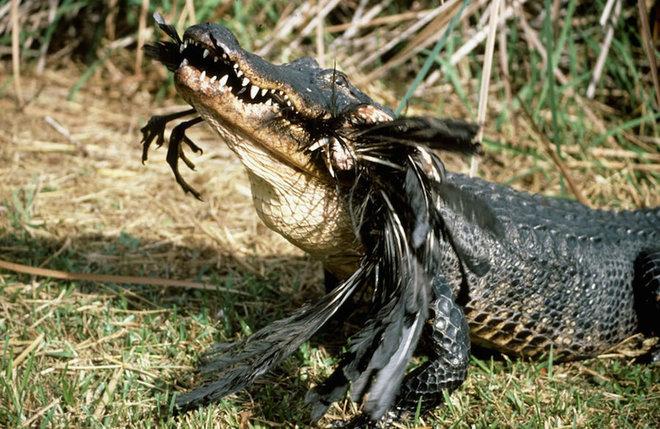 Everglades-6-1462789698_660x0
