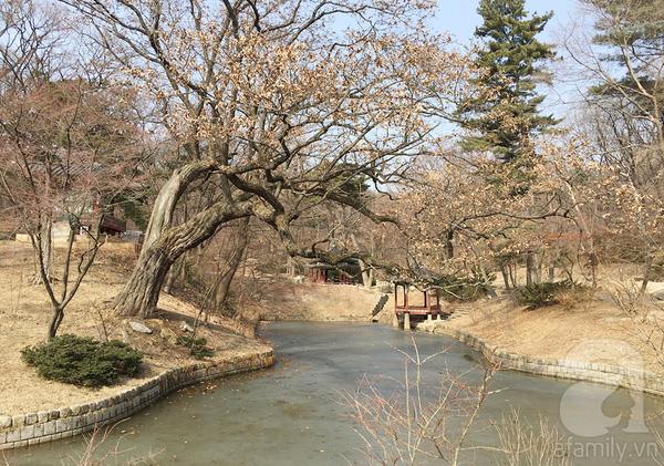 Những hàng cây tán lá vàng úa rũ xuống mặt hồ đã đóng băng